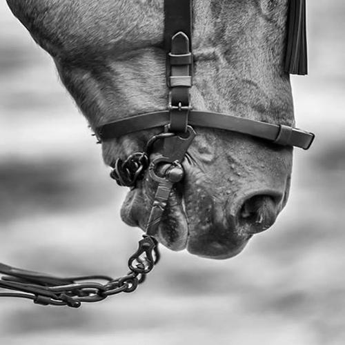 Bocados vaqueros